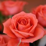 Valentine Dream