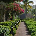 Greenery Path