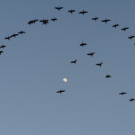 Moon Flock