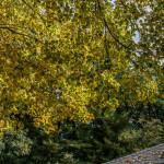Skylight Foliage