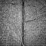 Tree of Vines