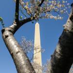 Washington Monument Branch