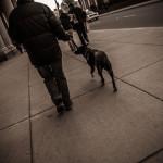 City Dog Walk